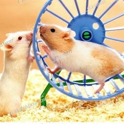 Hamster runners